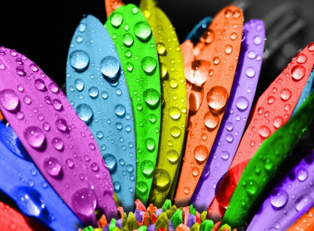 Картинки цветок разноцветный 2